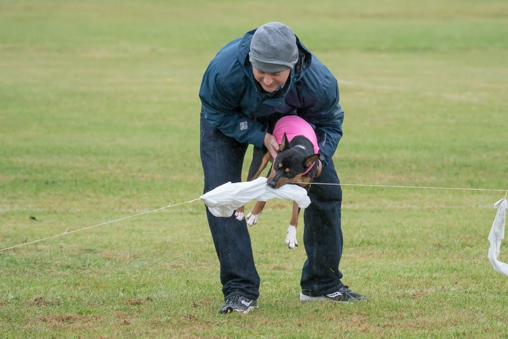 Spyros lure coursing