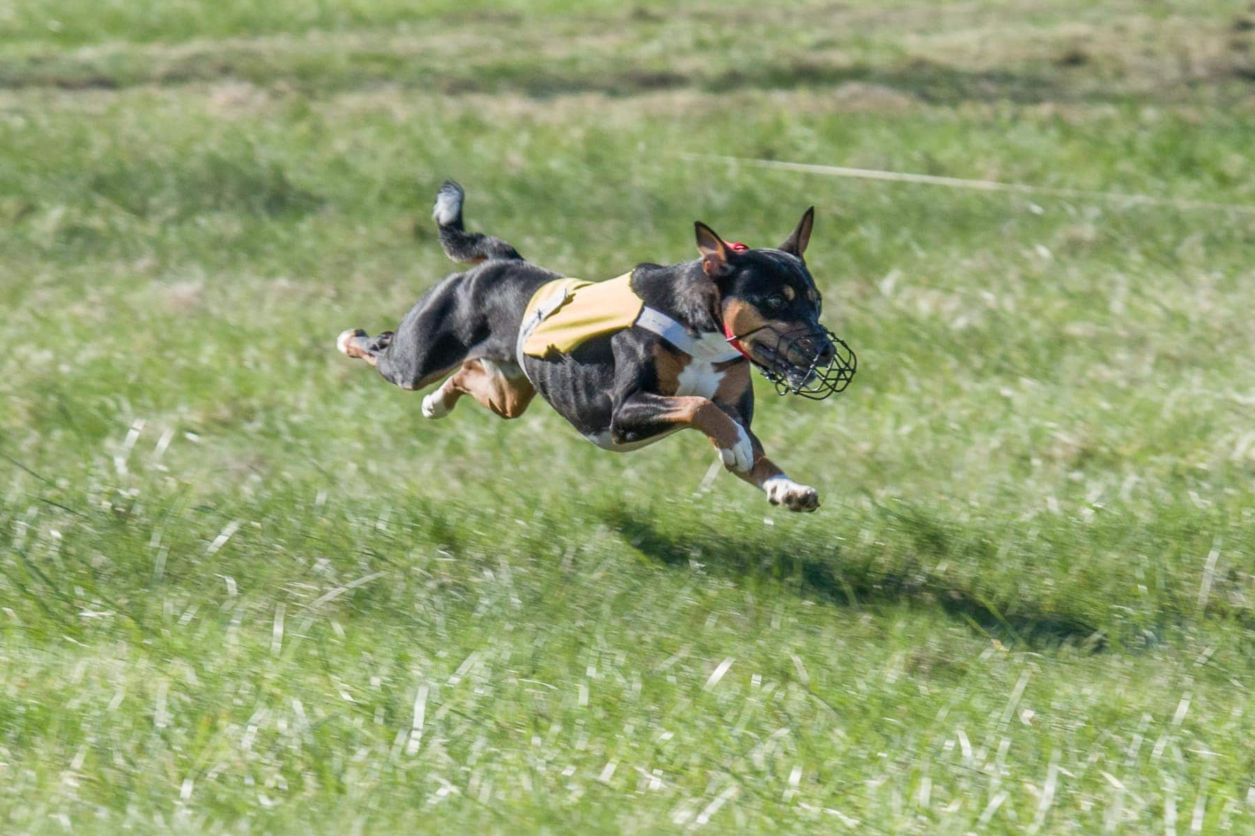 Spryos lure coursing